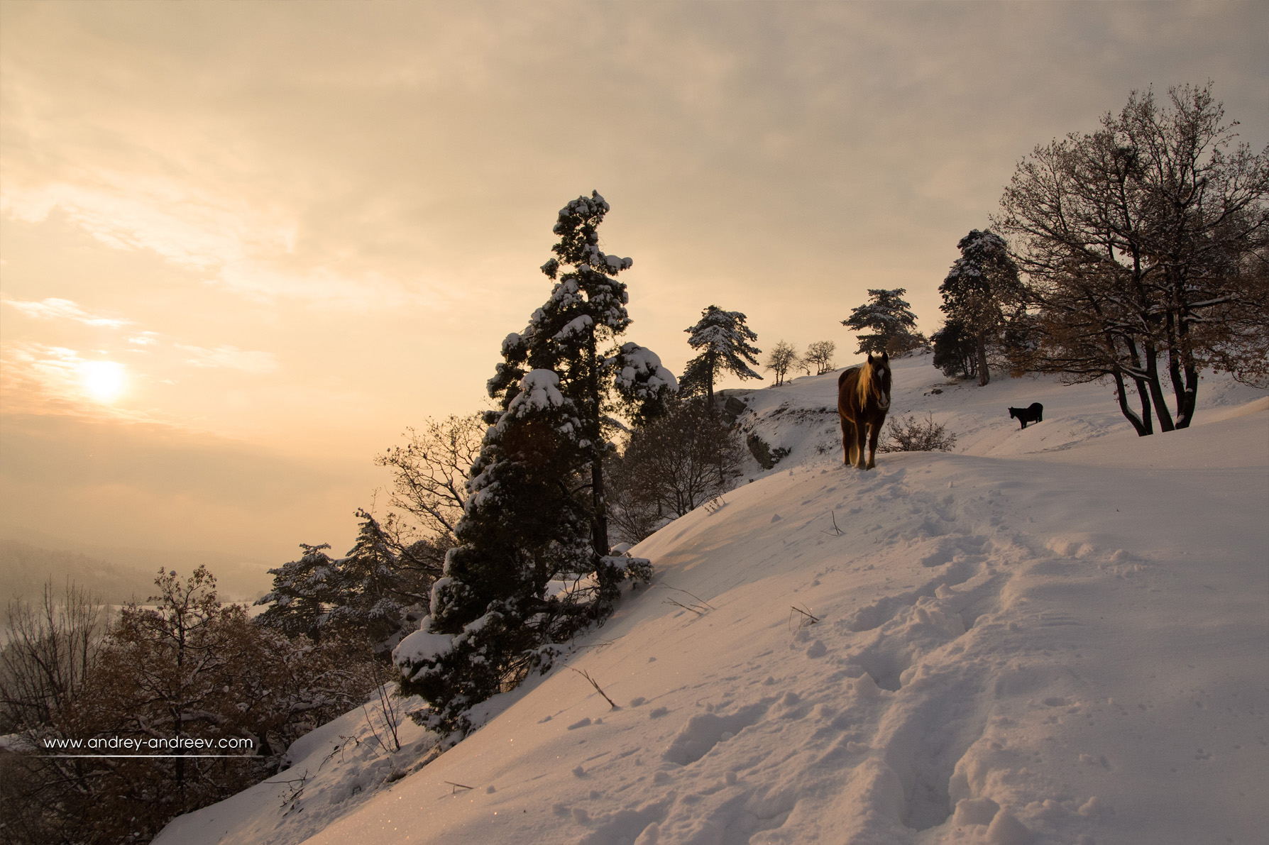 A lonely horse met us on sunset at Tsepina, Rhodope mountains, Bulgaria