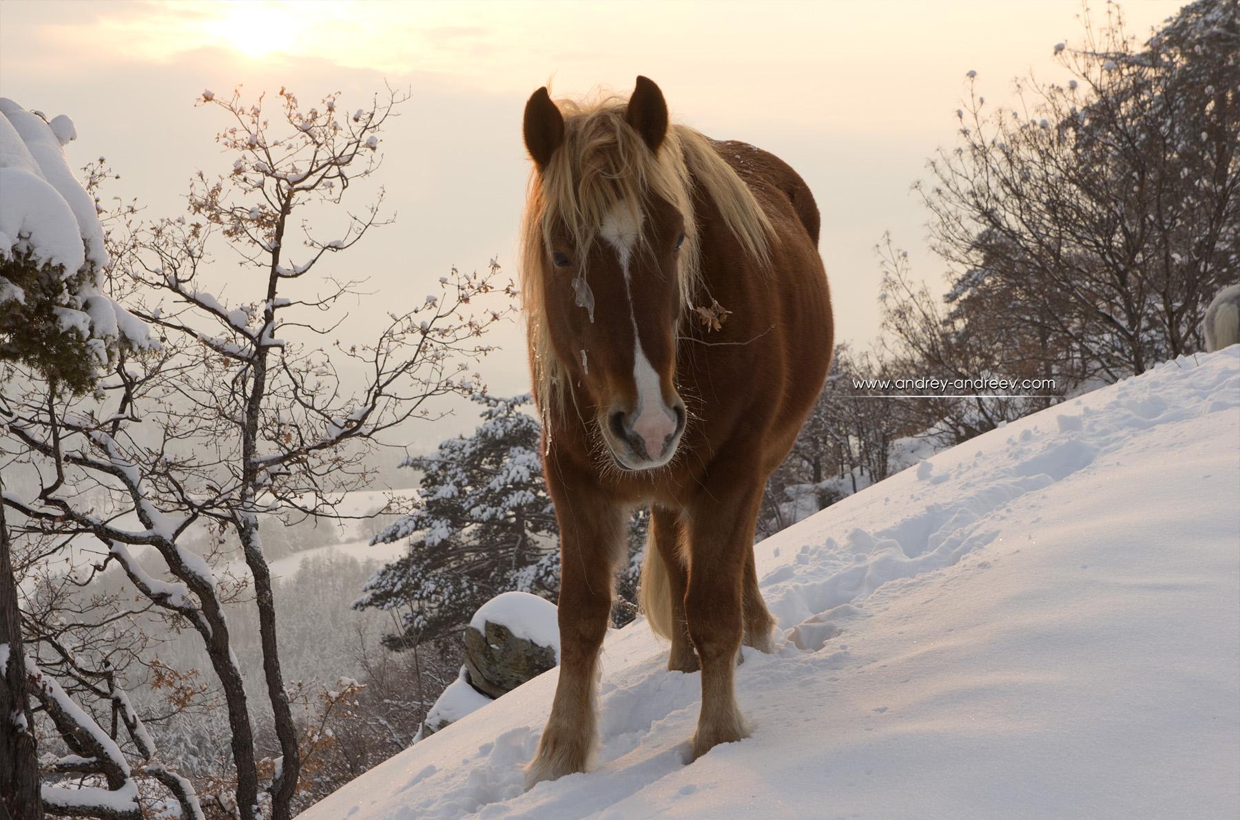 Horse at Tsepina Fortress