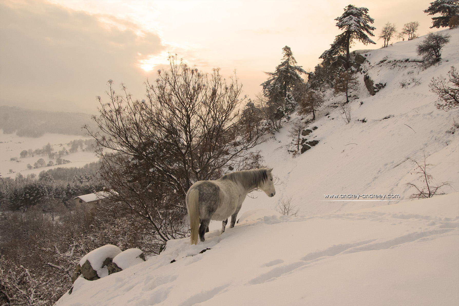 Horse near Tsepina fortress