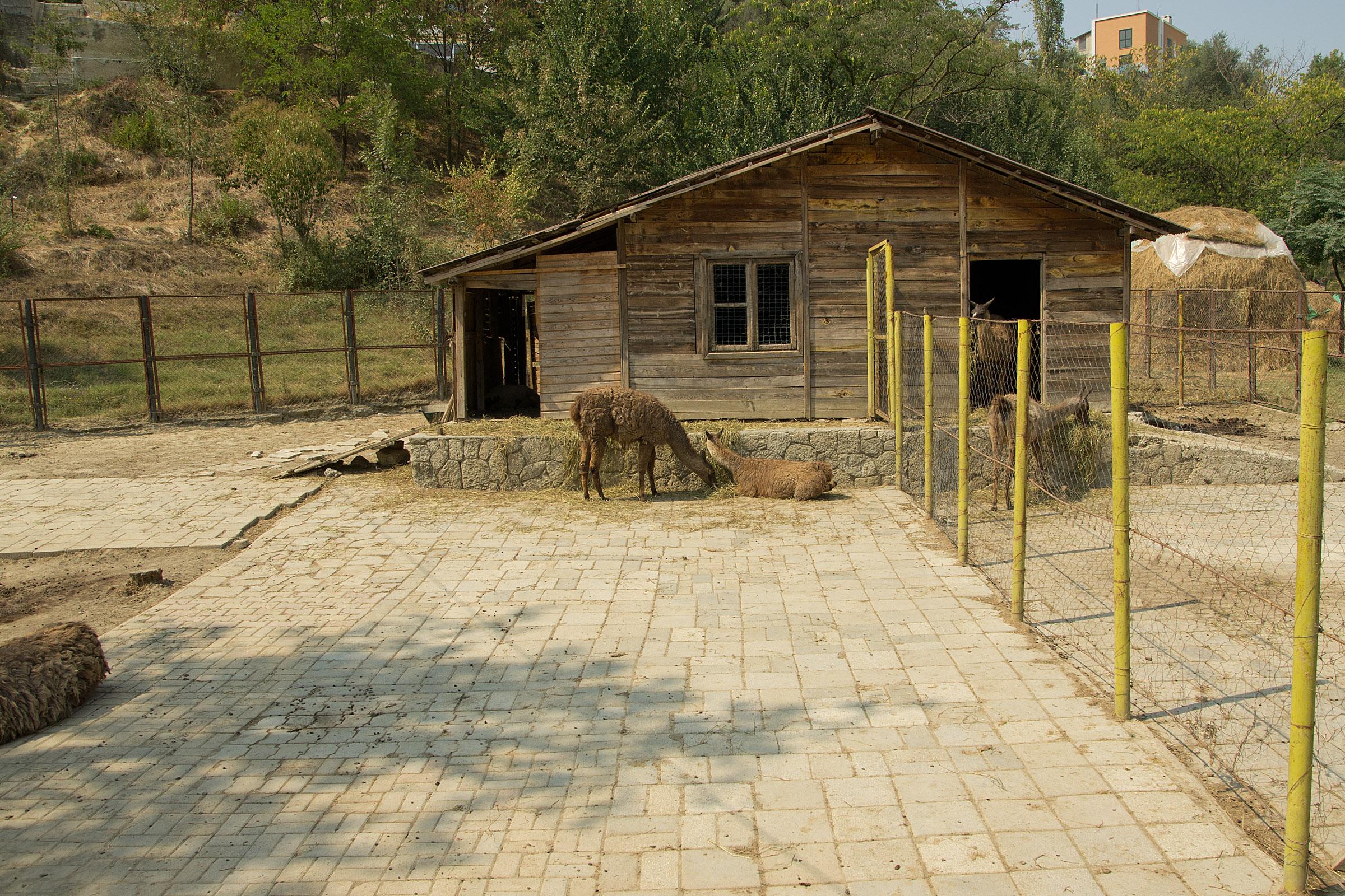 Зоопаркът в Тирана