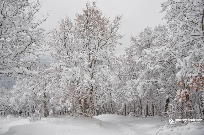 Родопи планина / Rodopi mountains
