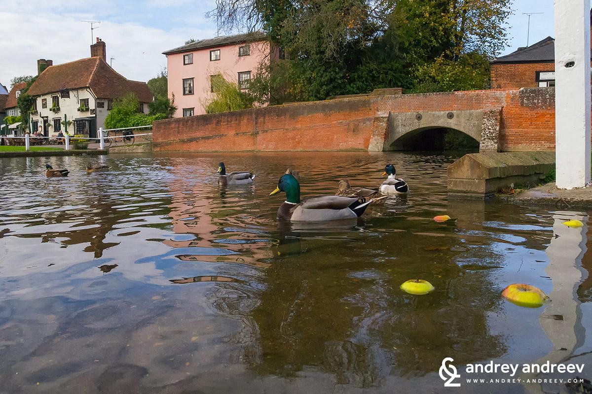 The pond in Finchingfield / Финчингфийлд