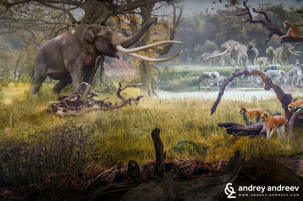 The Rhodopean mastodon