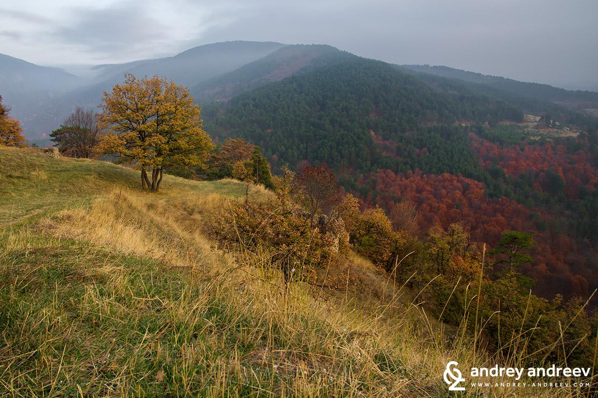 Изглед от Цепина / View from Tsepina