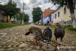 Local inhabitants of Viscri Romania
