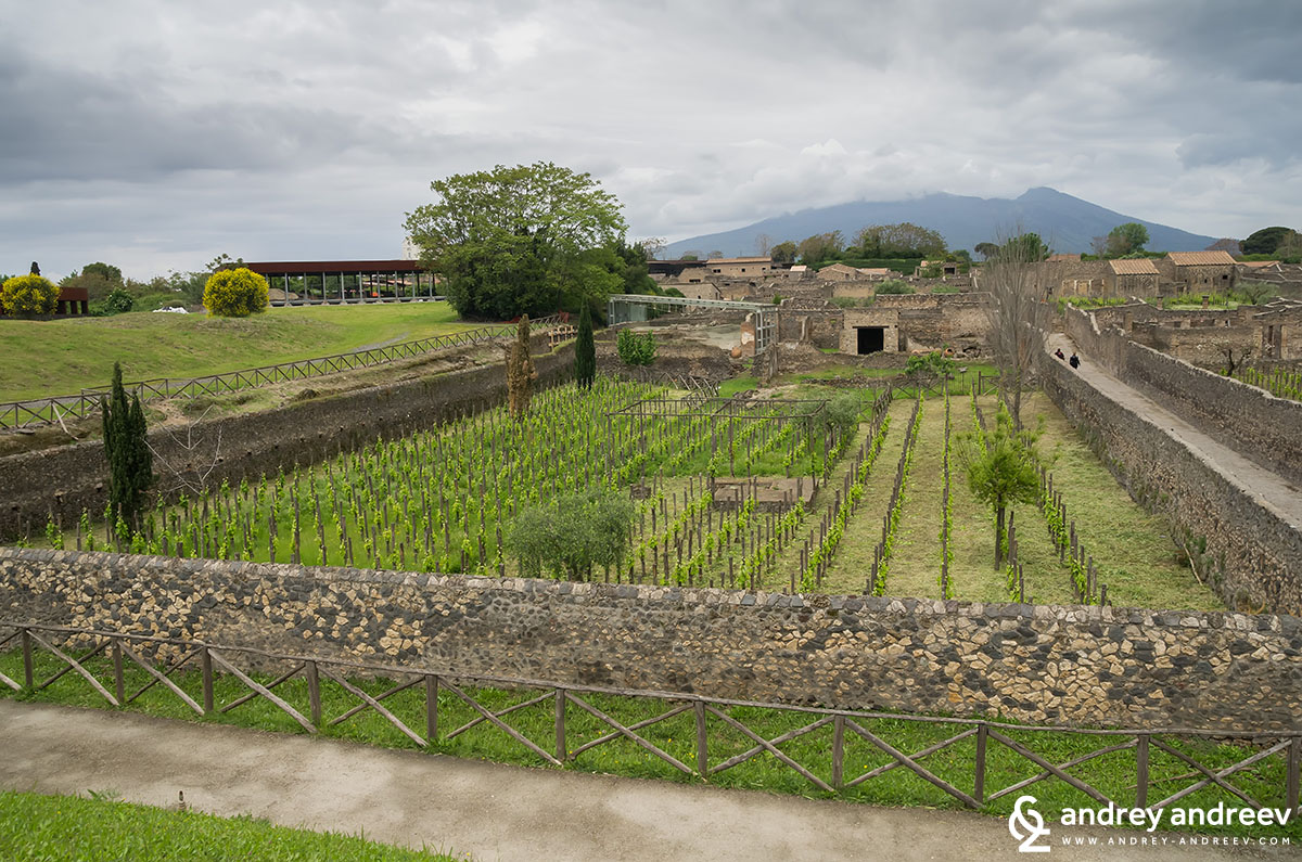 Vineyards of Pompeii