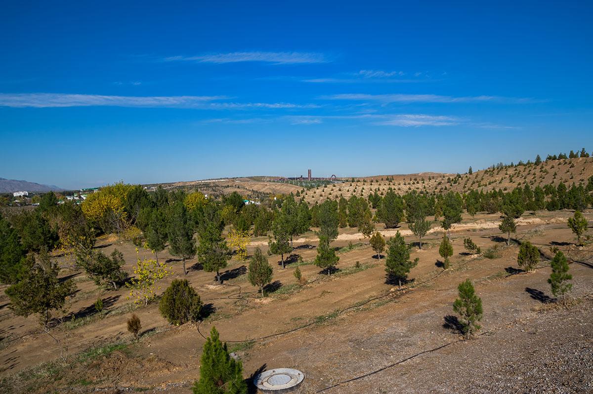 Новите дръвчета из пустинята, Туркменистан