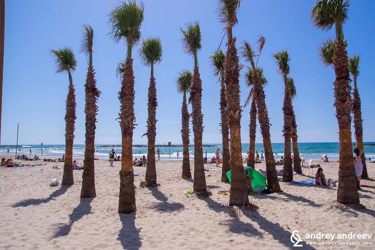 Палмите на плажа на Тел Авив