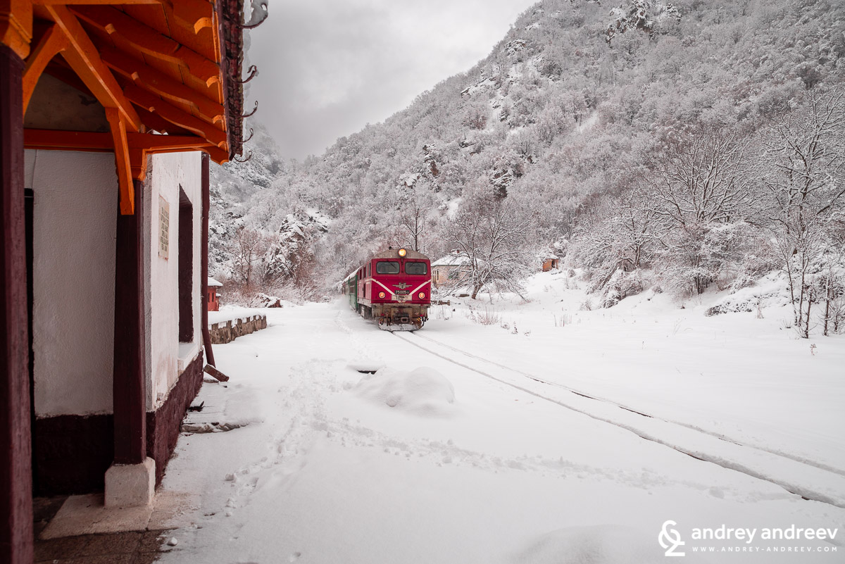Narrow gauge train near Tsepina station. Bulgaria