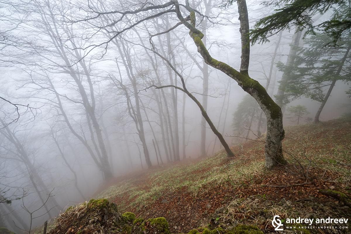 Мъгла из гората