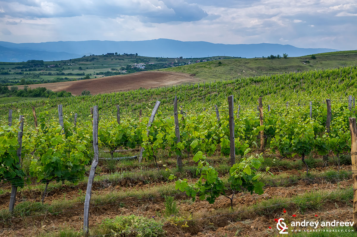 Villa Melnik vineyards, Bulgaria