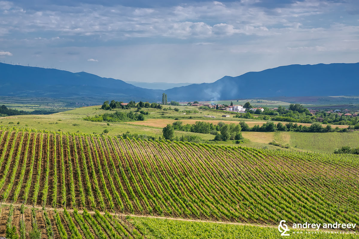 A view to Villa Melnik vineyards and Harsovo village, Bulgaria