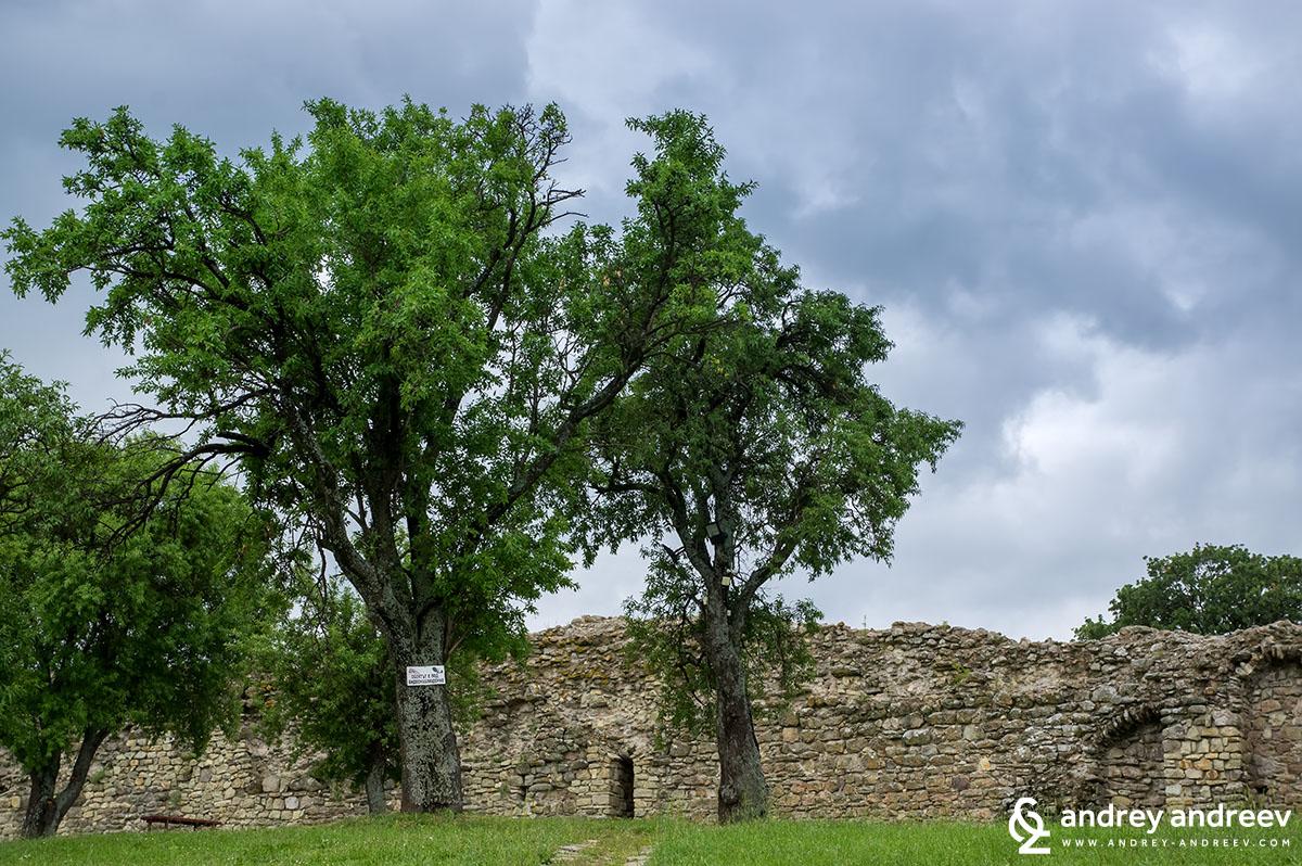 Във крепостта Неутзикон