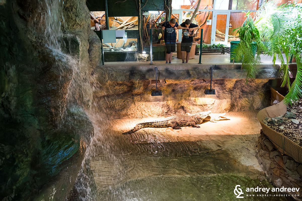 Happy Nile crocodile at the Zagreb zoo