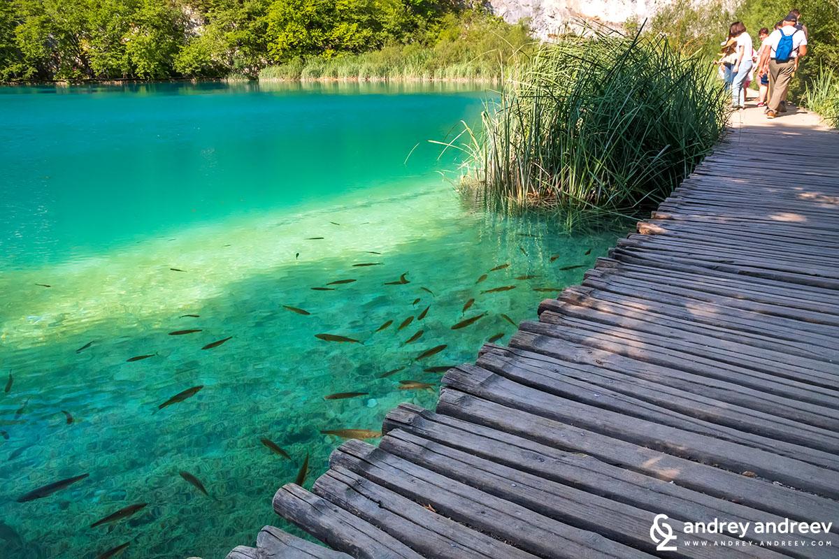 Пъстървата в езерата