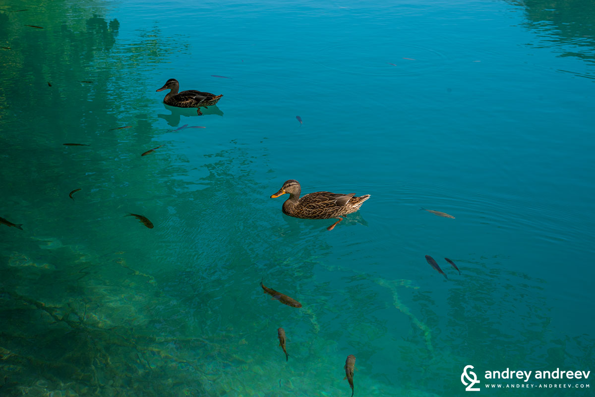 Обитателите на Плитвички езера