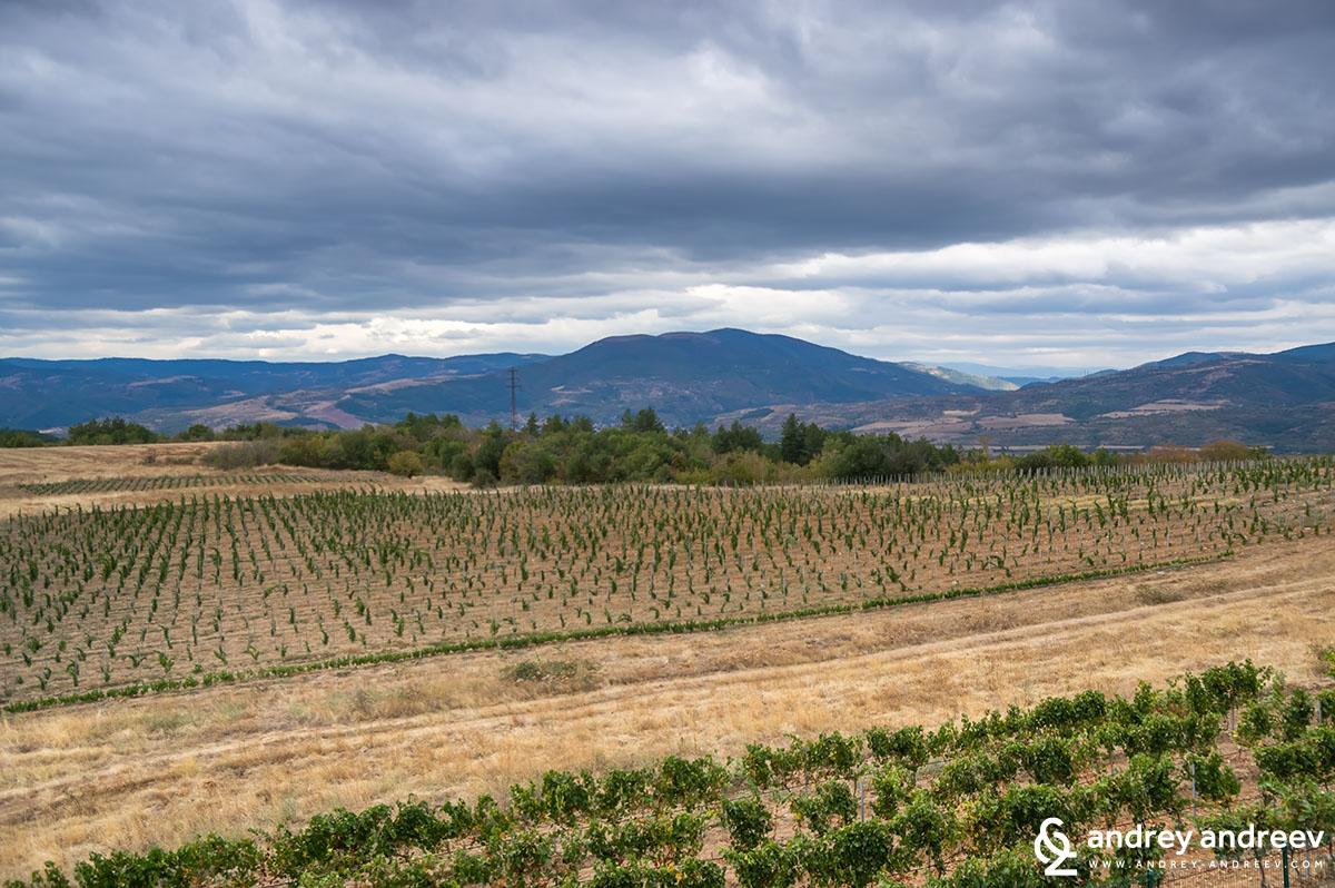 Vineyards near Medi Valley winery, Bulgaria