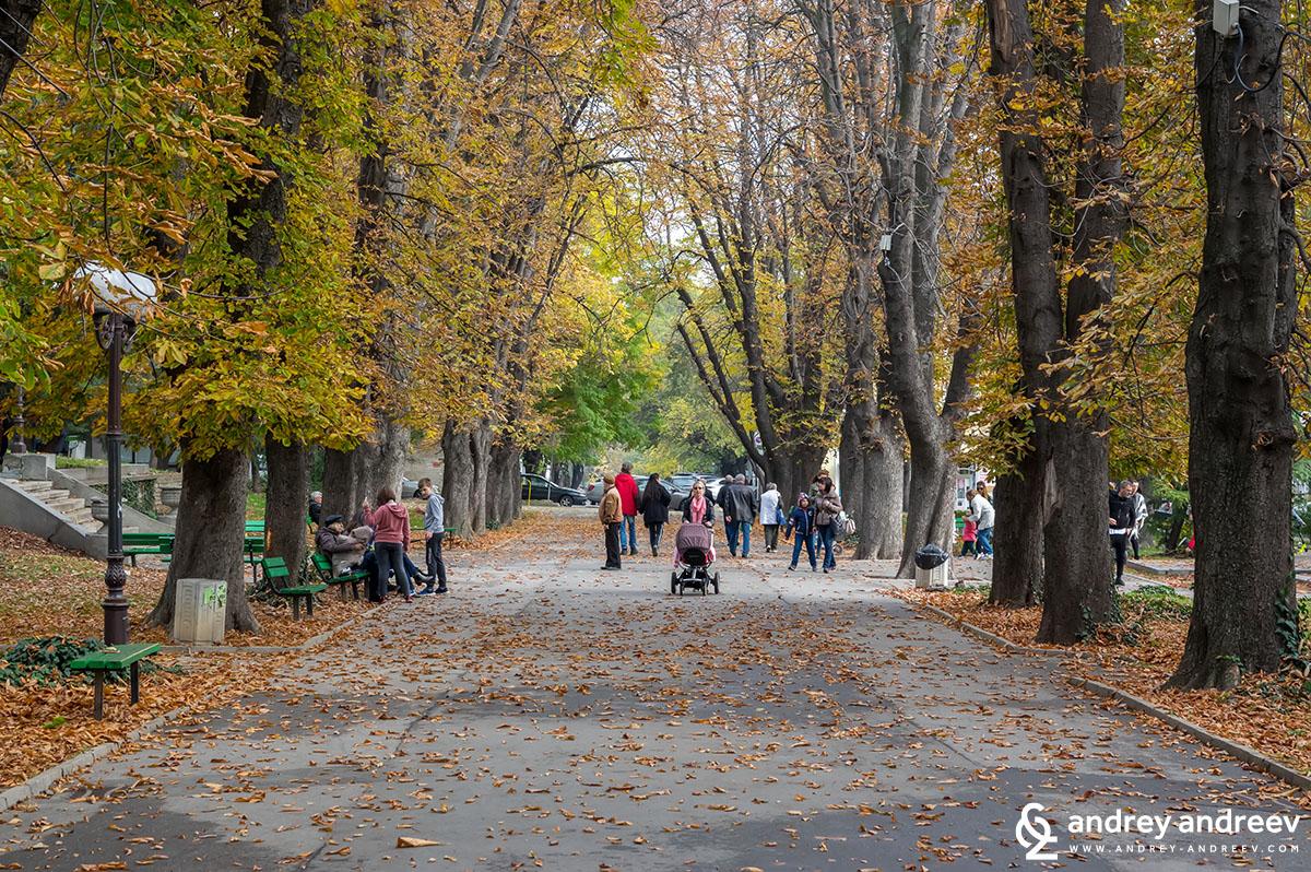 Алеята с кестените в парк 5-ти октомври