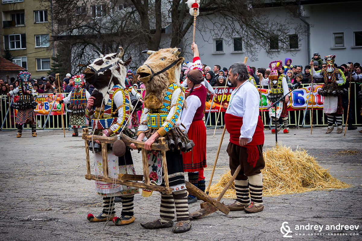 Plowing the field - Kukeri from Chelnik, Bulgaria - Surva Pernik carnival festival