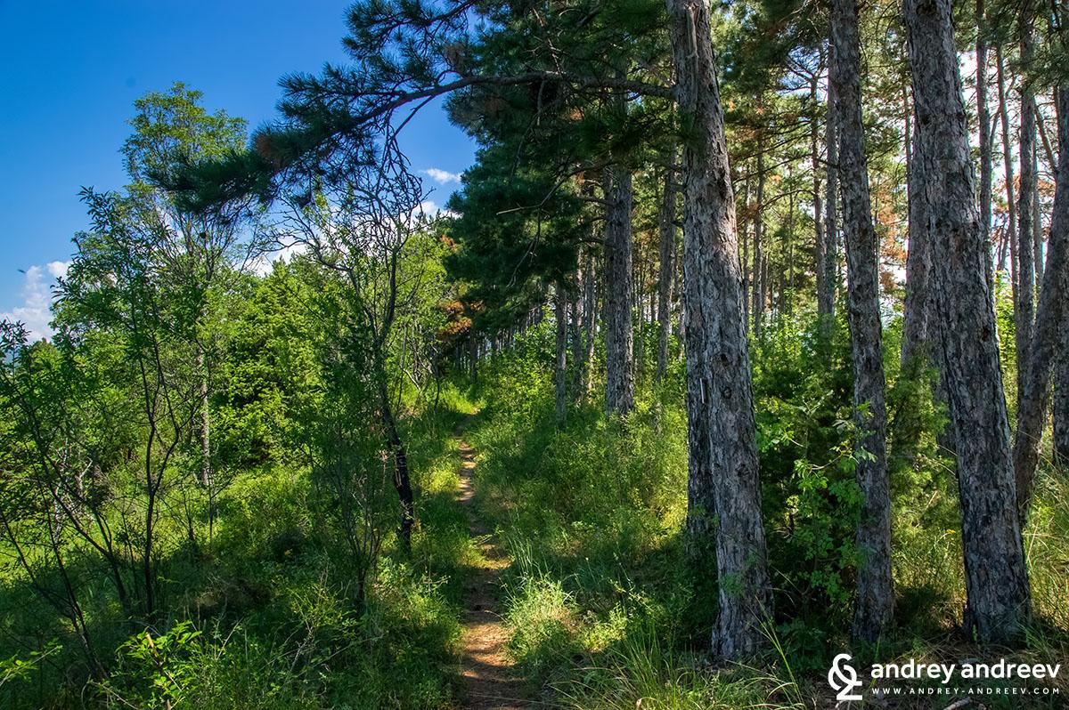 A path at Saint Nicholas plateau near Melnik, Bulgaria