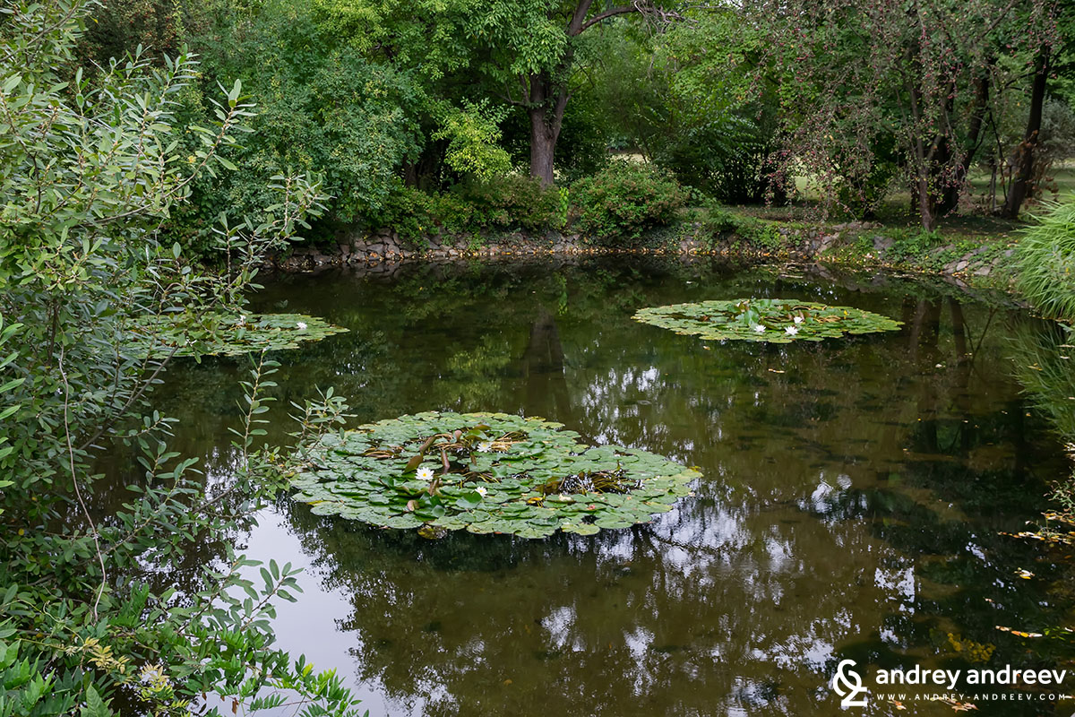 The lake with lilies in the autumn, Vrana park, Bulgaria