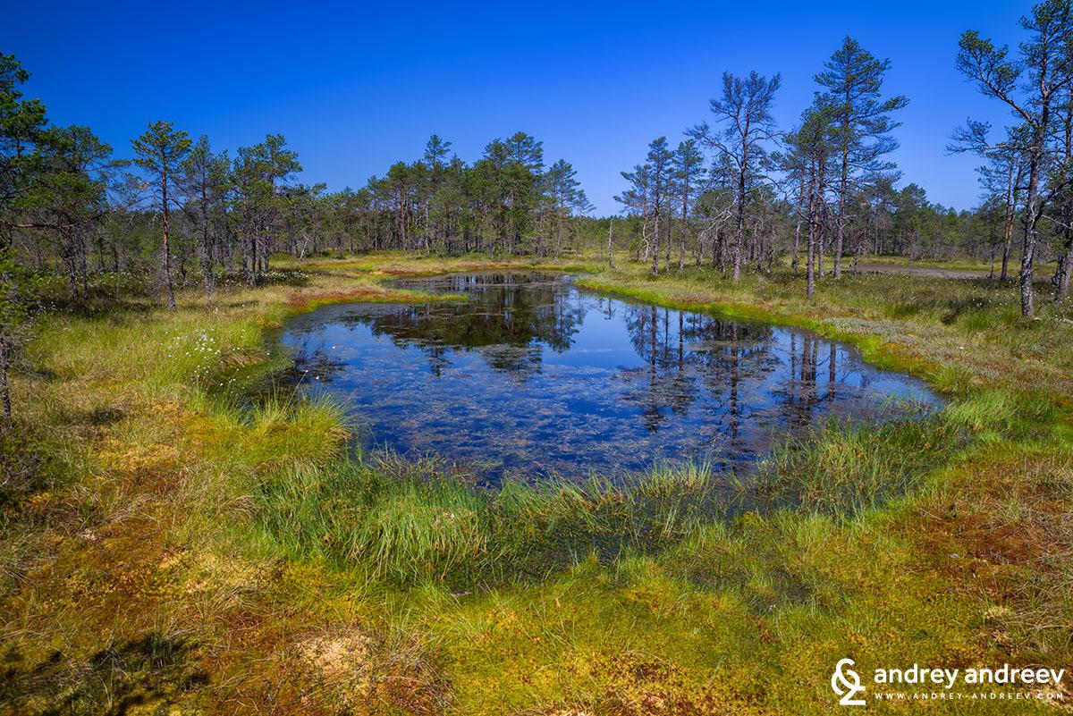 Блатото Виру в националния парк Лахемаа