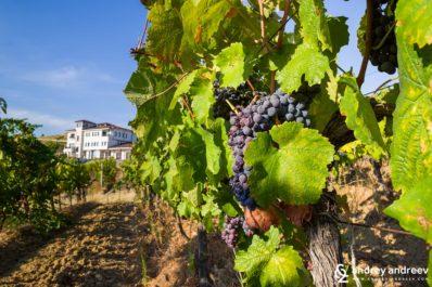 Винарска изба Вила Мелник през есента