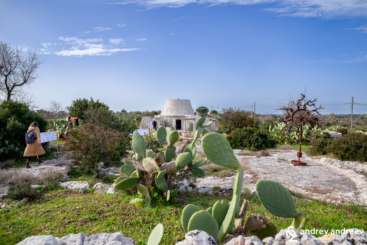 The yard with prickly pears and a pajaru house