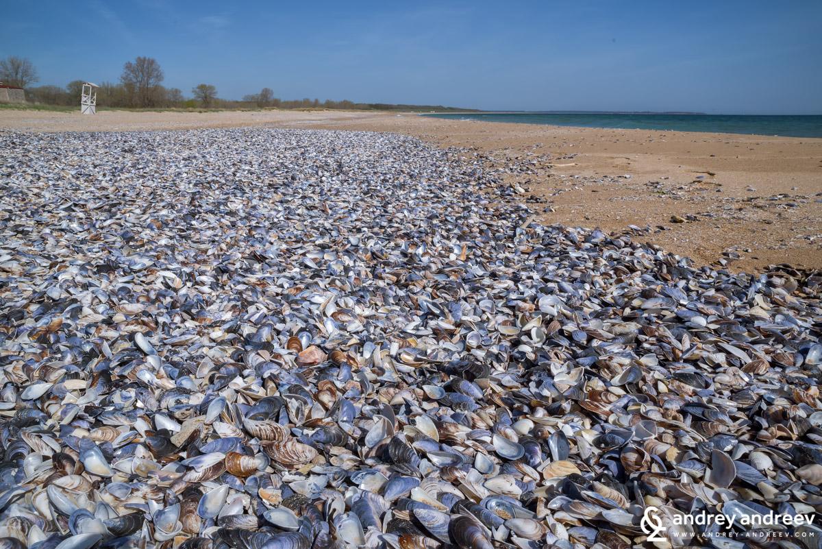 Мидички на плажа на Крапец