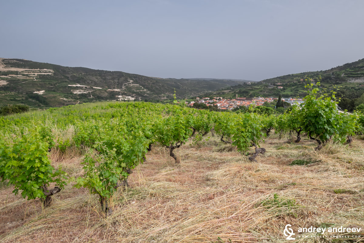Гледка към лозовите масиви и село Омодос