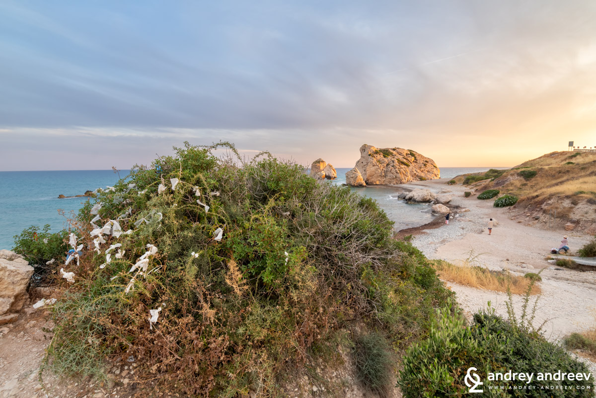A bush with many ribbons on Aphrodite's beach - Petra tou Romiou