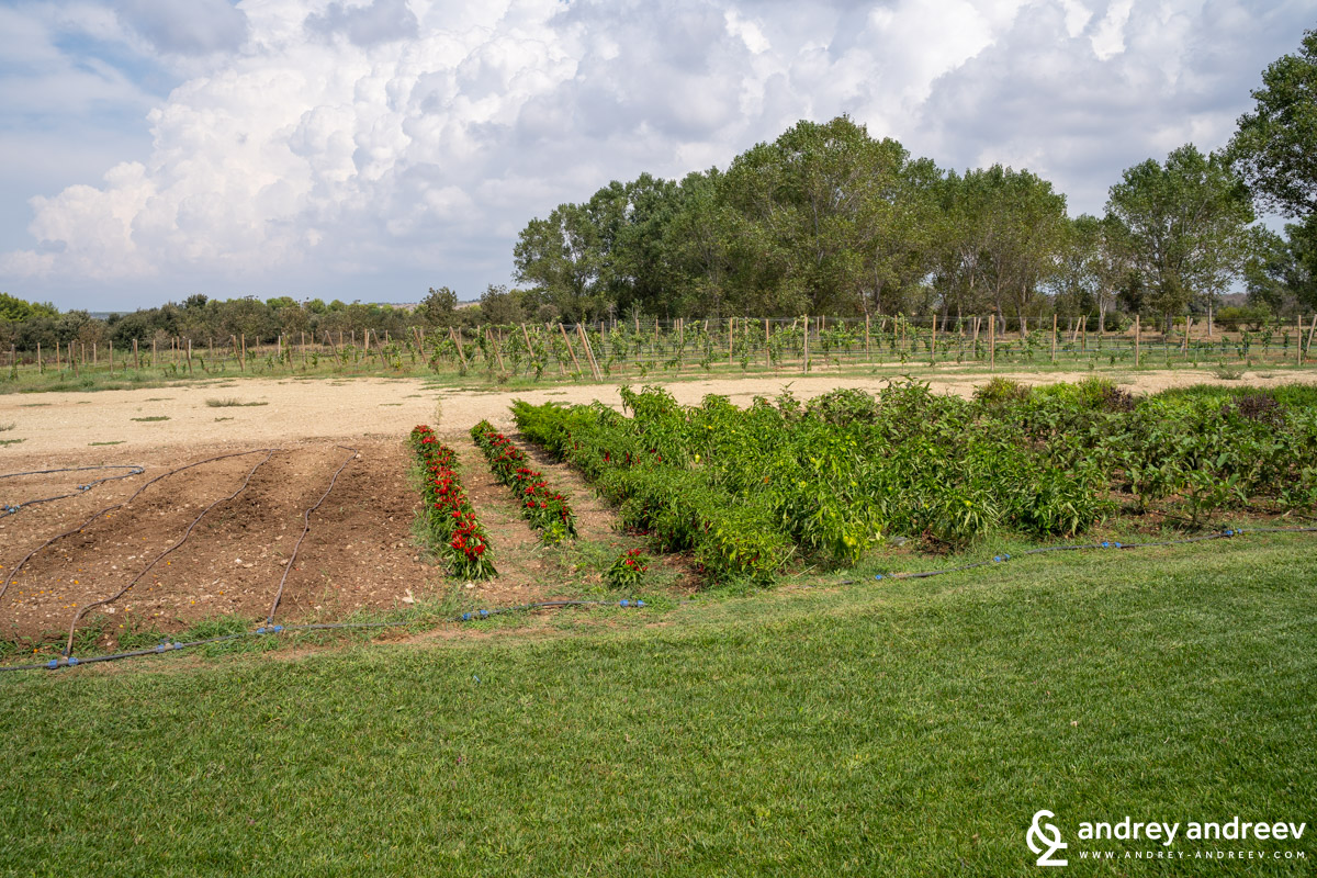 The vegetable garden at Coppola Winery, winery in Puglia, wine cellar in Salrnto