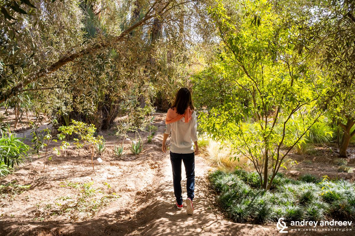 Из градините на Jnane Tamsna, хотел край Маракеш, Мароко