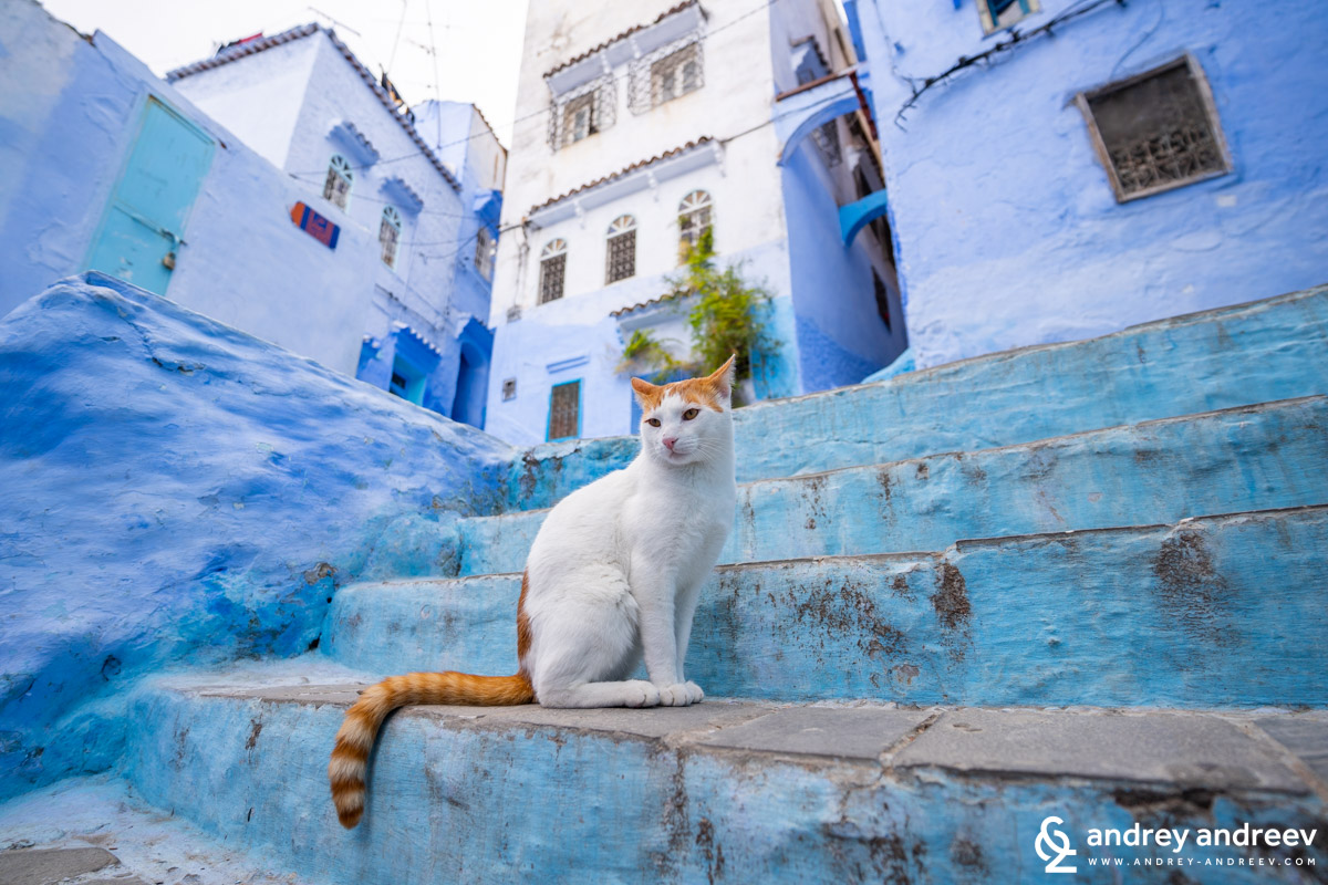 Cats are a popular view in Chefchaouen