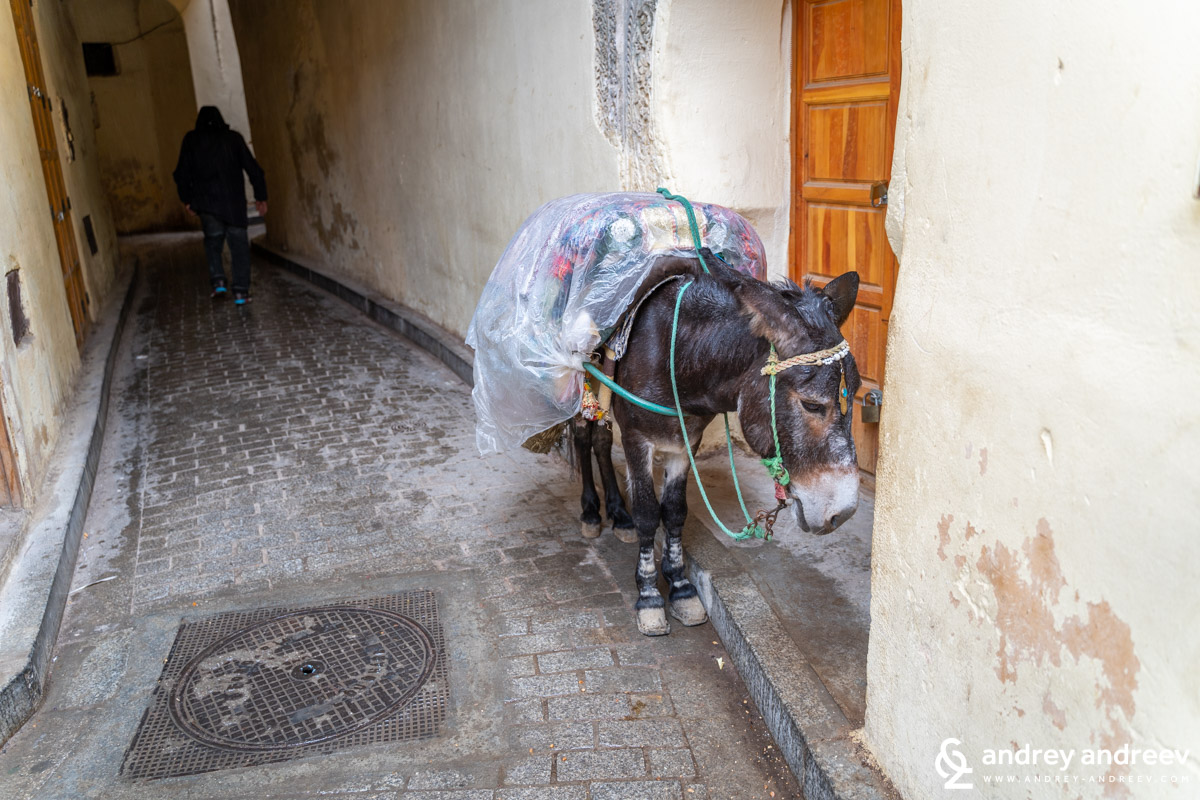 Mules are the main means for transportation in the medina. They serve both as taxis, cargo and garbage trucks