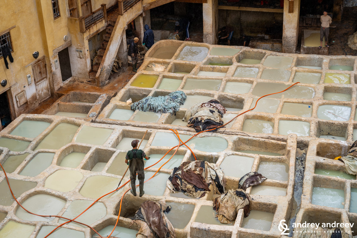 Tanning and softening the hides at the Chouara tannery
