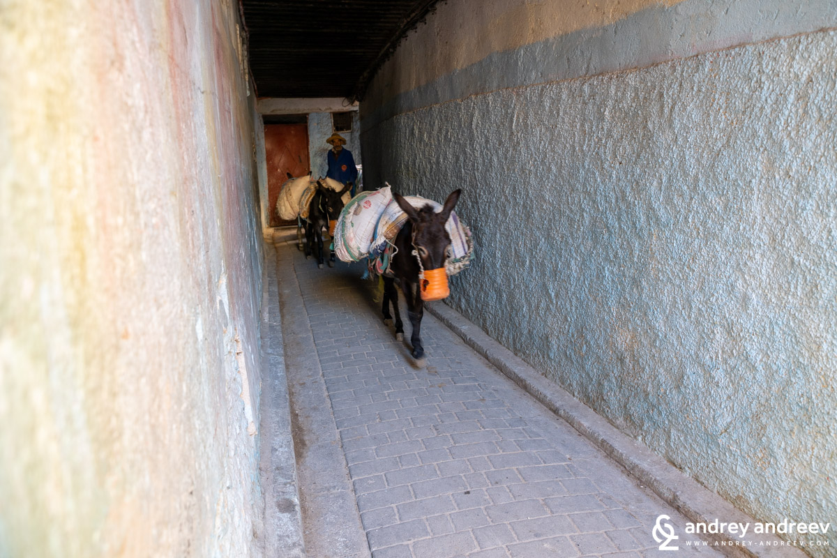 Mules in the medina of Fes