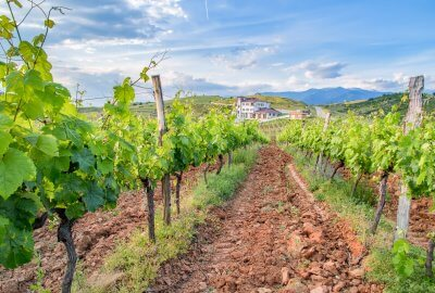 На винена дегустация като професионалист из българските винарски изби