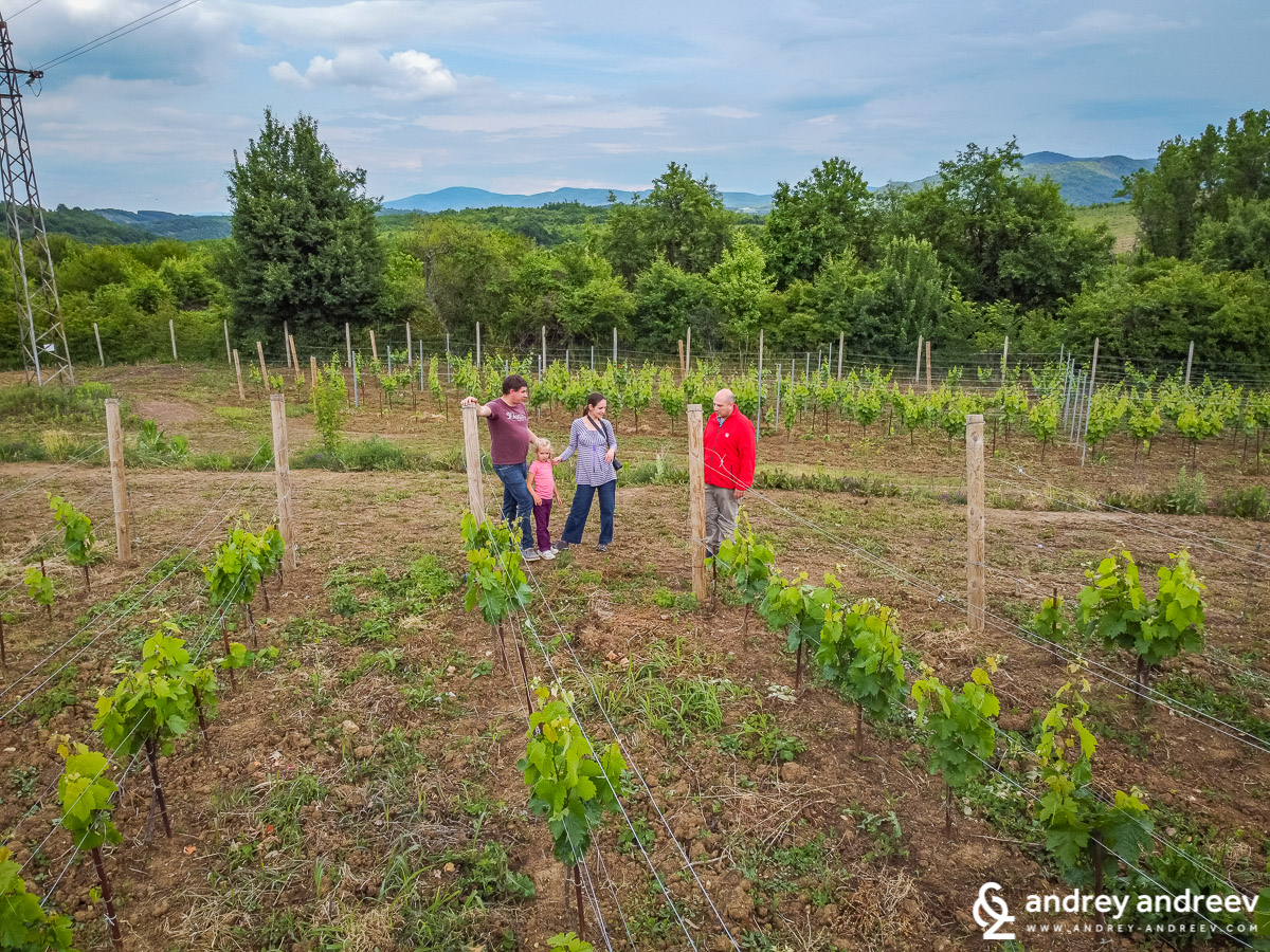 A walk among the young vineyards of Yalovo Winery