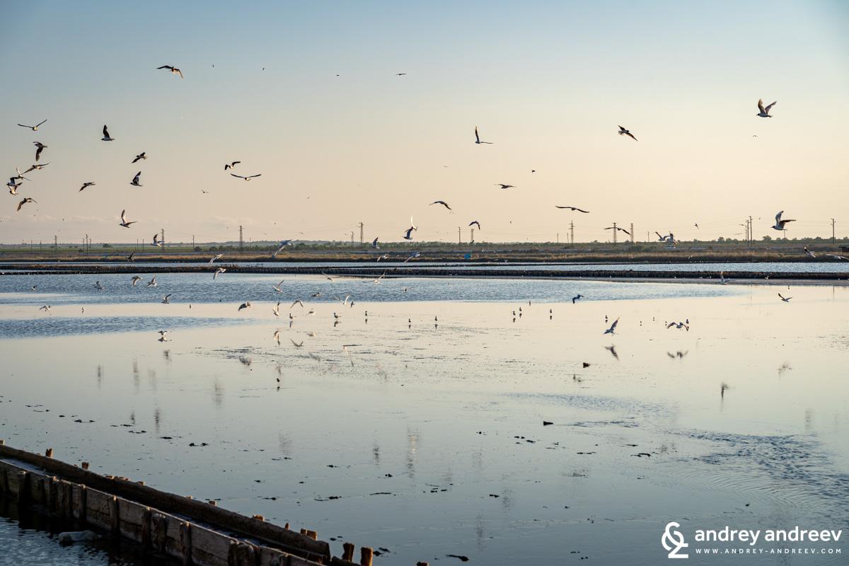 Поморийското езеро по залез