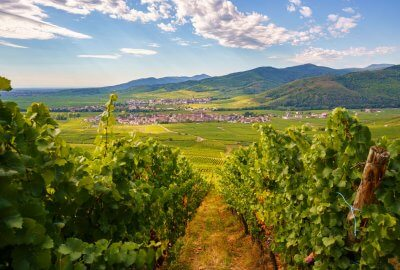 View towards Kientzheim, Alsace, from the vineyards
