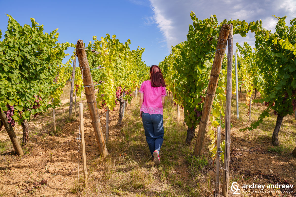 Maria in the Gewurztraminer rows