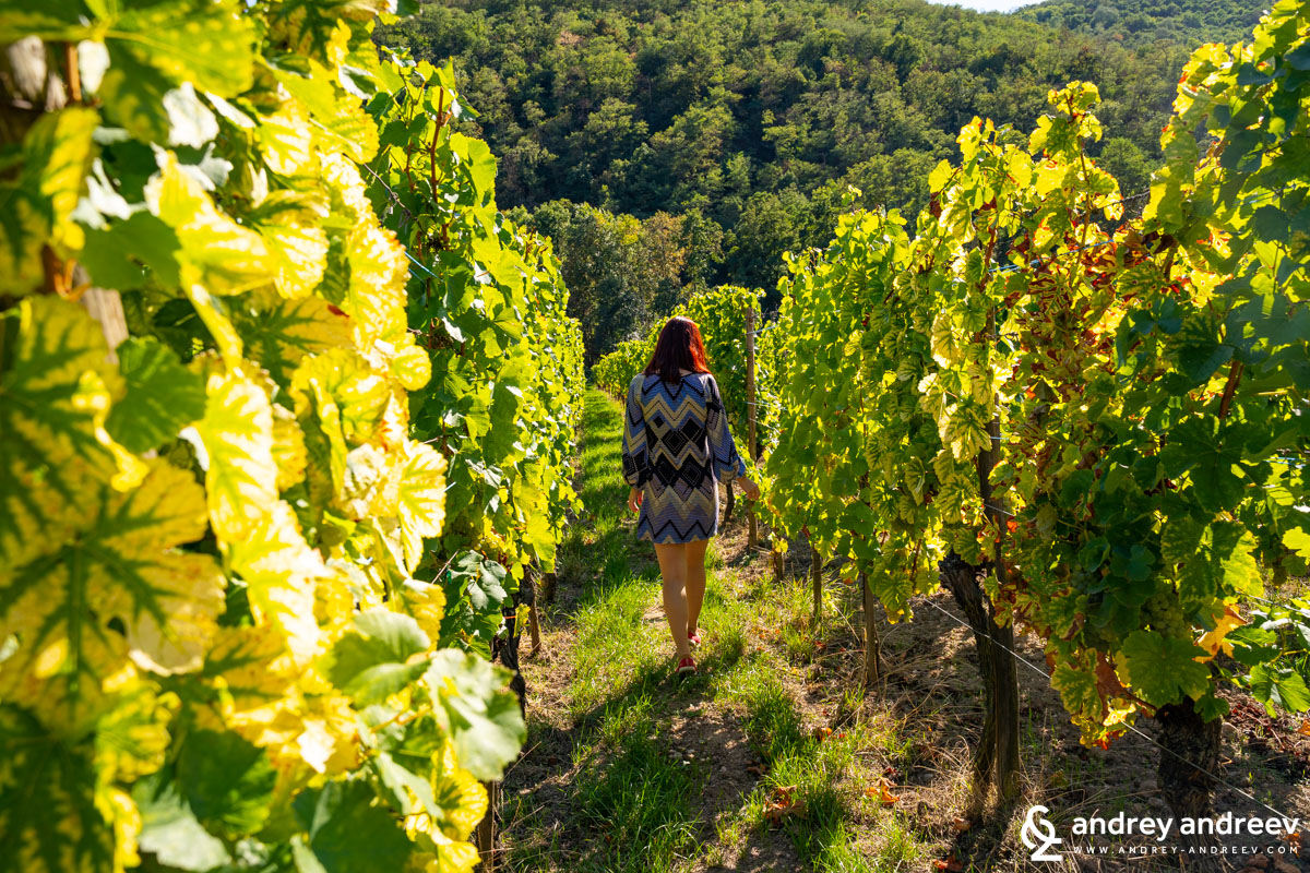 Walking towards Domaine Weinbach