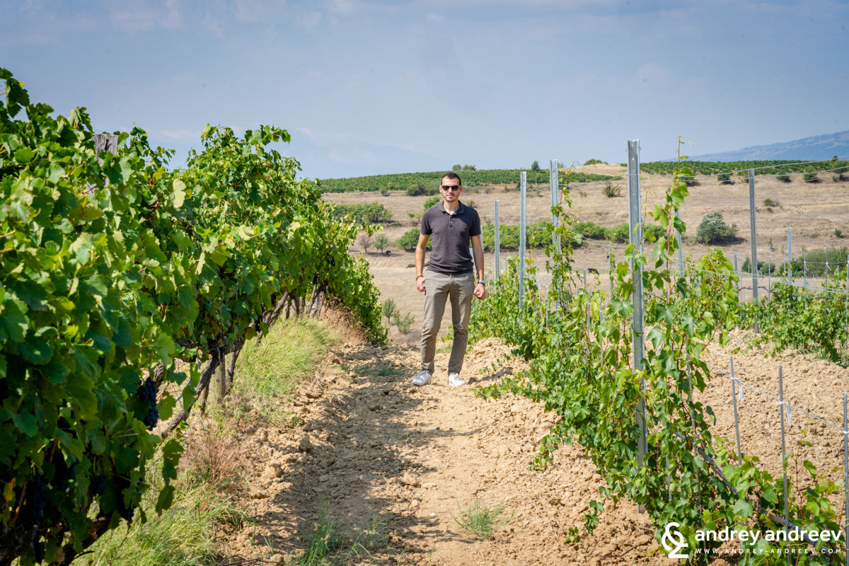 Kiril, Zlaten Rozhen's winemaker in the vineyards