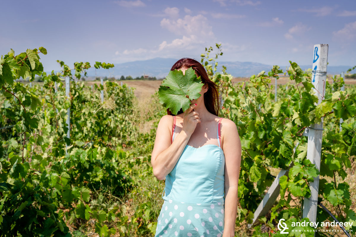 Maria and the Broad-leaved Melnik (Shiroka Melnik))