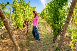 Мими си опитва грозде сред лозята на Елзас