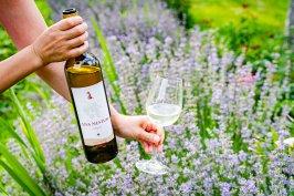 Вино Алиготе 2020 от Ува Нестум